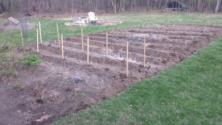 Growing my tomatoes on stakes this year instead of using cages.